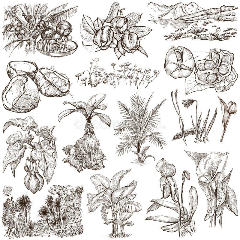 Λουλούδια, δέντρα, εγκαταστάσεις - ένα συρμένο χέρι πακέτο πρωτότυπα διανυσματική απεικόνιση