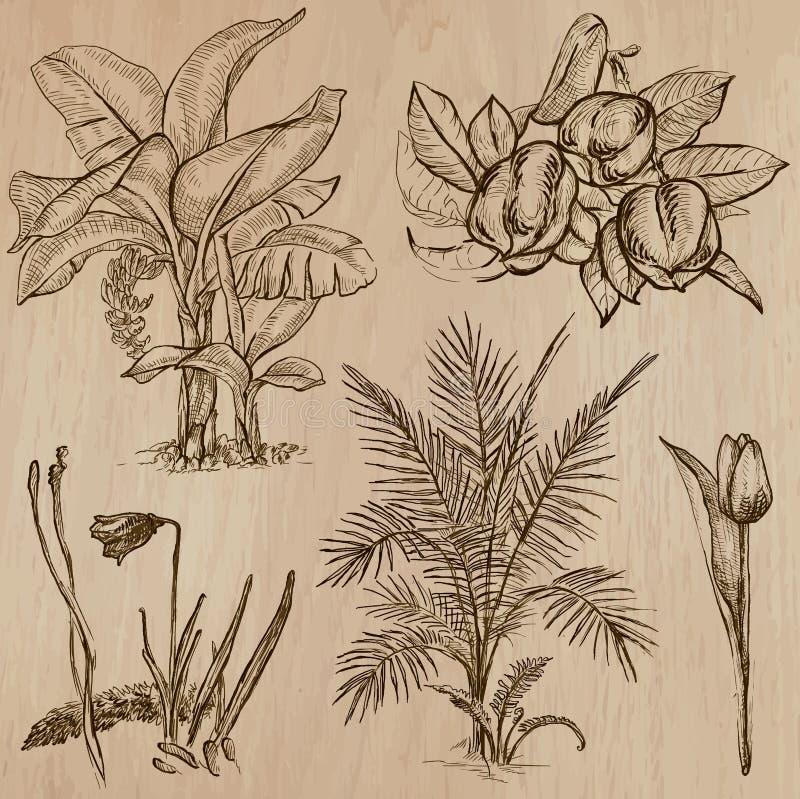 Λουλούδια, δέντρα, εγκαταστάσεις - συρμένο χέρι διανυσματικό πακέτο διανυσματική απεικόνιση
