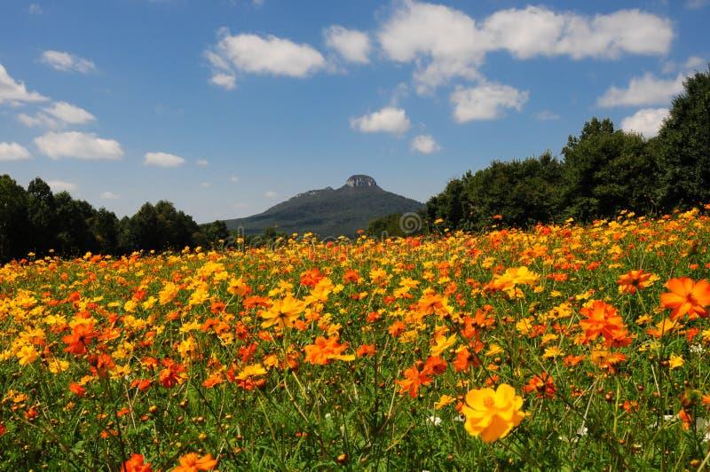Λουλούδια ακρών του δρόμου στοκ εικόνα με δικαίωμα ελεύθερης χρήσης