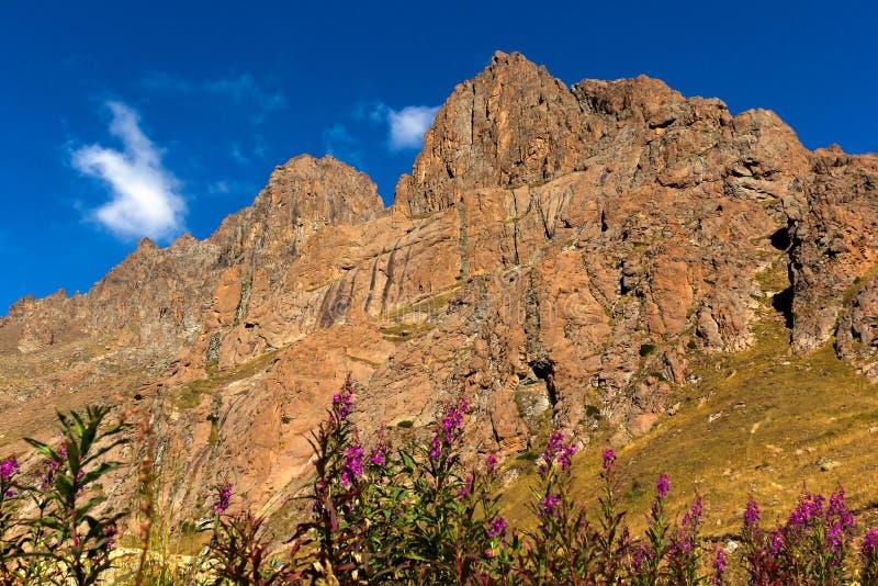 Λουλούδια, βουνά και μπλε ουρανός στοκ εικόνες