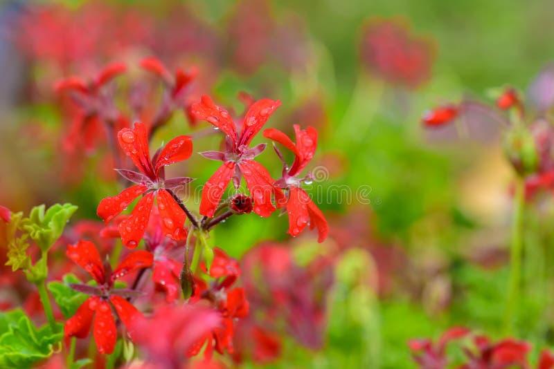 Λουλούδια γερανιών στοκ φωτογραφία με δικαίωμα ελεύθερης χρήσης