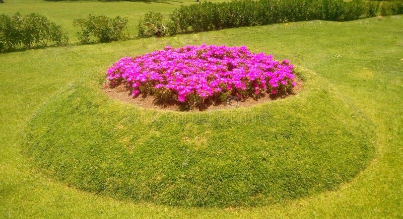 Λουλούδια γερανιών στοκ εικόνες