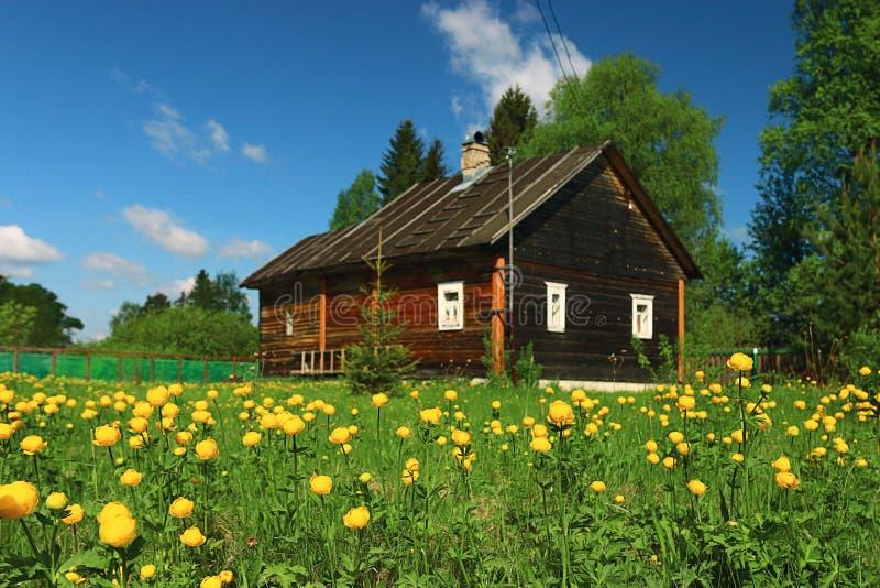 Λουλούδια θερινών εξοχικών σπιτιών στοκ φωτογραφία με δικαίωμα ελεύθερης χρήσης
