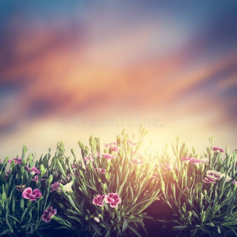 Λουλούδια θερινών λιβαδιών στη χλόη στο ηλιοβασίλεμα Τρύγος στοκ φωτογραφίες