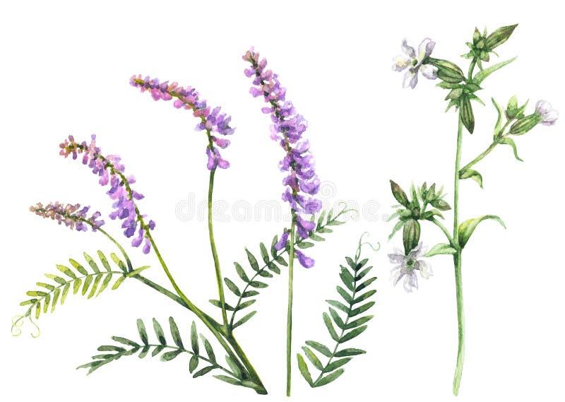 Λουλούδια θερινών τομέων καθορισμένα ελεύθερη απεικόνιση δικαιώματος