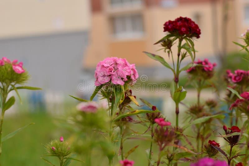 Λουλούδια λιβαδιών στοκ εικόνες με δικαίωμα ελεύθερης χρήσης