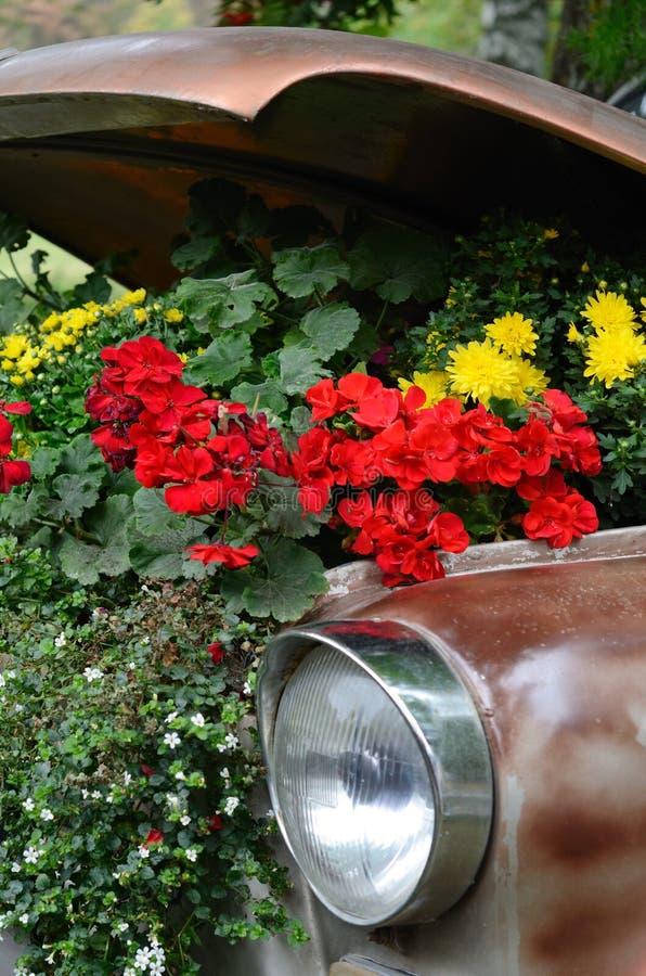 Λουλούδια κάτω από την κουκούλα ενός παλαιού αυτοκινήτου στοκ εικόνα με δικαίωμα ελεύθερης χρήσης