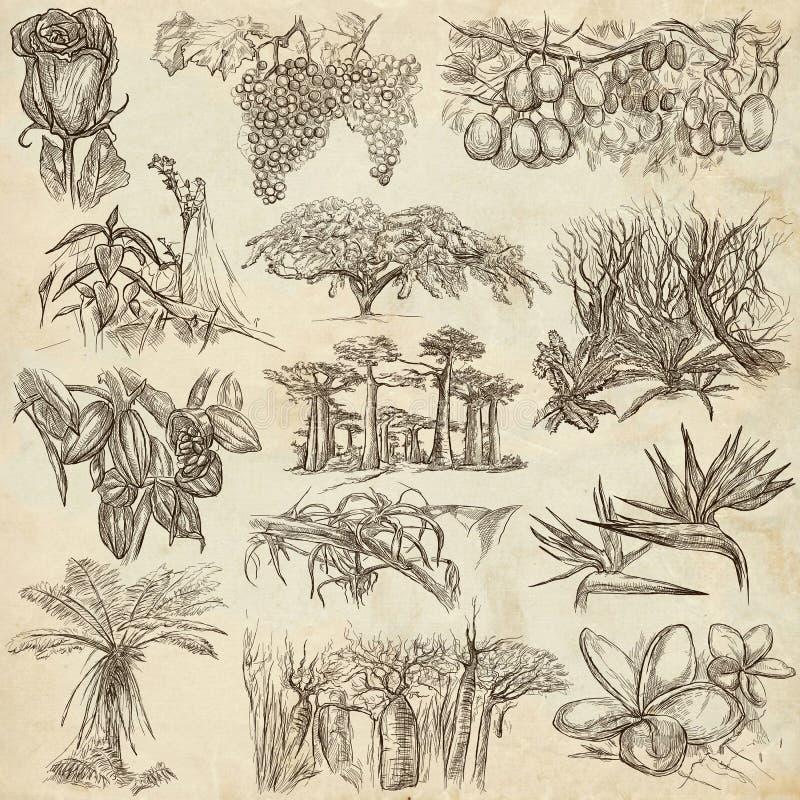 Λουλούδια και δέντρα σε όλο τον κόσμο - μια συρμένη χέρι συλλογή, φ ελεύθερη απεικόνιση δικαιώματος