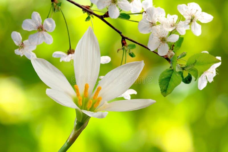 Λουλούδια και ανθίζοντας κλάδοι στοκ φωτογραφίες με δικαίωμα ελεύθερης χρήσης