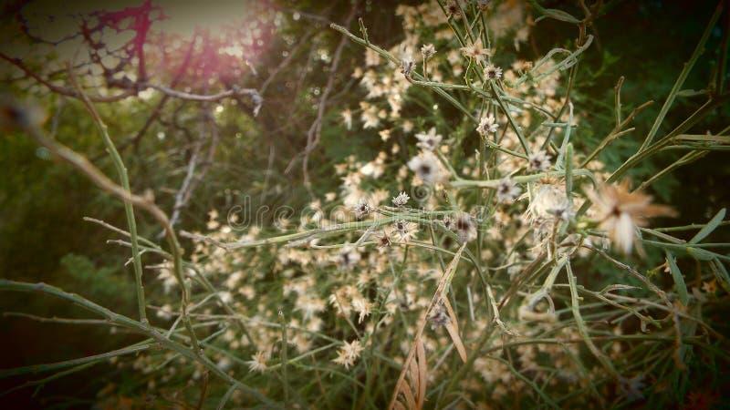 Λουλούδια και ηλιοφάνεια στοκ φωτογραφία με δικαίωμα ελεύθερης χρήσης