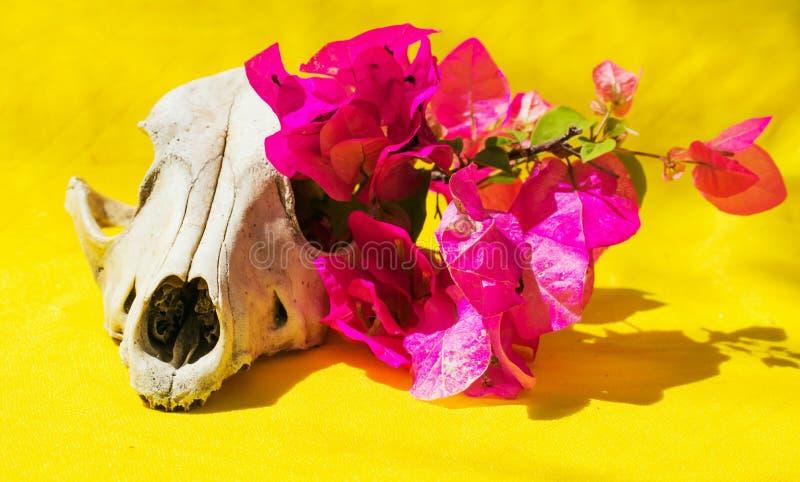 Λουλούδια και κρανίο στοκ εικόνα με δικαίωμα ελεύθερης χρήσης