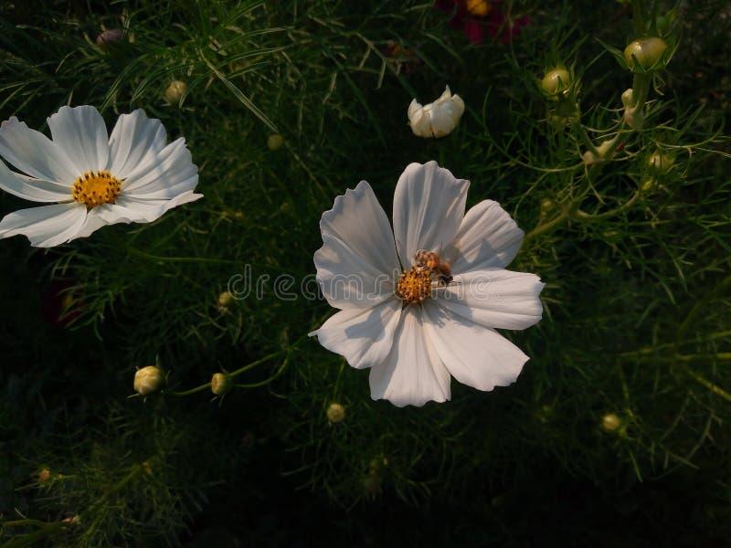 Λουλούδια και μέλισσα στοκ φωτογραφίες