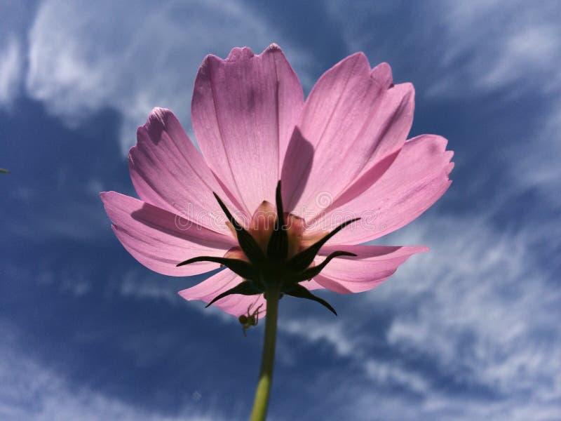 Λουλούδια και μπλε ουρανός στοκ φωτογραφία