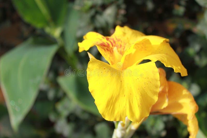 Λουλούδια και χρώματα στοκ φωτογραφίες