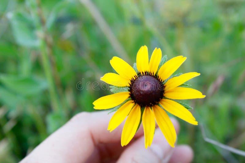 Λουλούδια κατά μήκος του τρόπου στοκ εικόνες