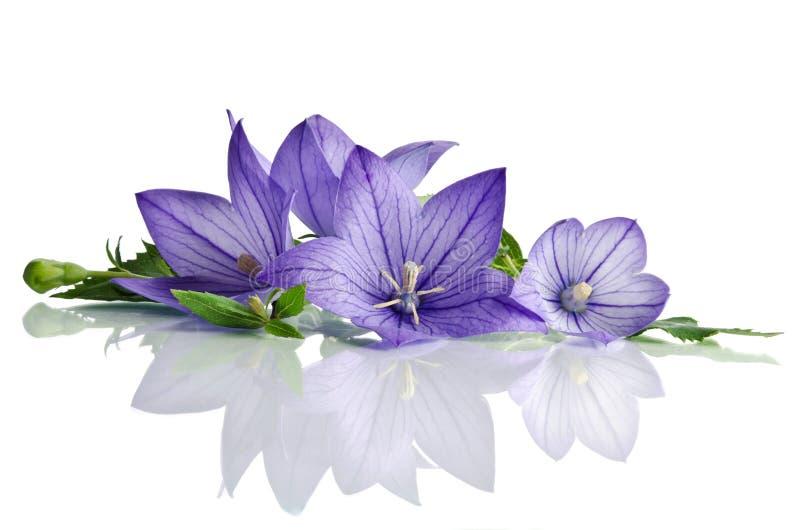 Download Λουλούδια κουδουνιών στοκ εικόνες. εικόνα από closeup - 62723828