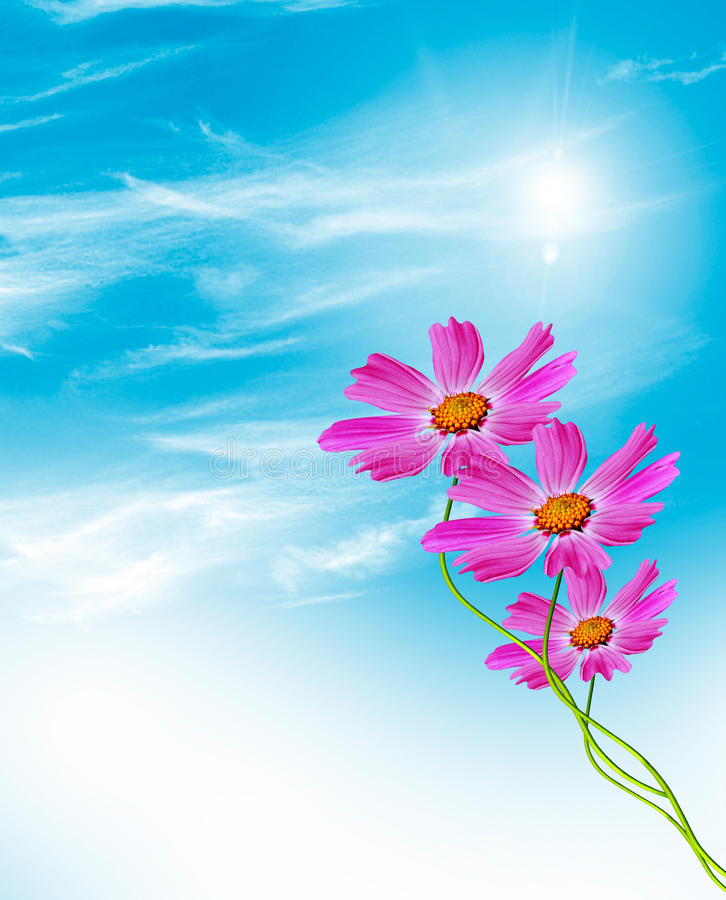 Λουλούδια κόσμου σε ένα υπόβαθρο του μπλε ουρανού με τα σύννεφα στοκ φωτογραφία
