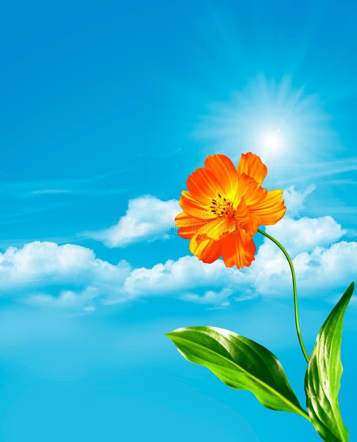 Λουλούδια κόσμου σε ένα υπόβαθρο του μπλε ουρανού με τα σύννεφα στοκ εικόνες με δικαίωμα ελεύθερης χρήσης