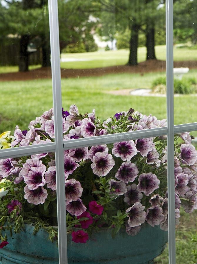 Λουλούδια μέσω του παραθύρου στοκ εικόνες με δικαίωμα ελεύθερης χρήσης