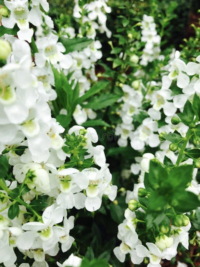 Λουλούδια μετά από τη βροχή στοκ εικόνες με δικαίωμα ελεύθερης χρήσης