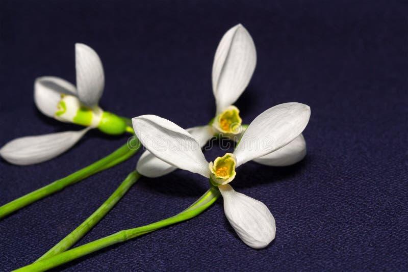 Λουλούδια με τα άσπρα πέταλα στοκ φωτογραφίες
