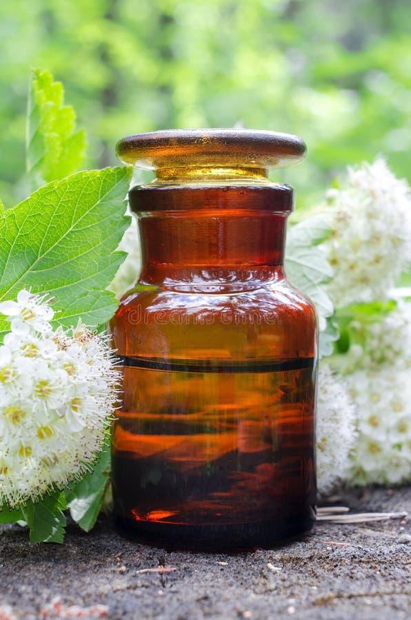 Λουλούδια μπουκαλιών και κραταίγου αποθηκαρίων σαν αποτελεσματική βοτανική μεταχείρηση perforatum ιατρικής hypericum κατάθλιψης α στοκ φωτογραφία με δικαίωμα ελεύθερης χρήσης