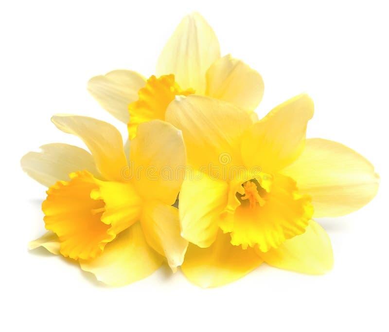 Λουλούδια ναρκίσσων στοκ φωτογραφία με δικαίωμα ελεύθερης χρήσης