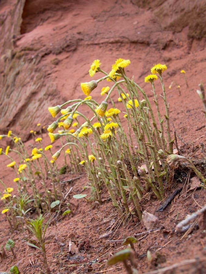 Λουλούδια ομάδας που αυξάνονται σε μια κλίση στοκ φωτογραφία με δικαίωμα ελεύθερης χρήσης