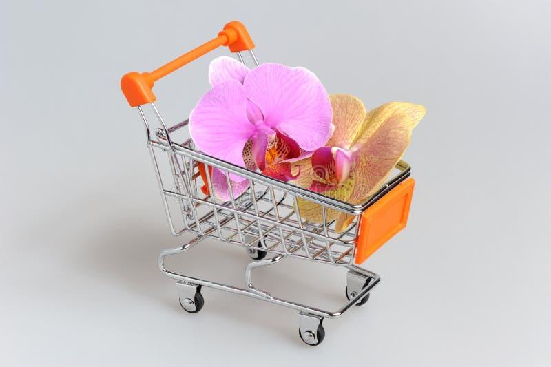 Λουλούδια ορχιδεών στη χειράμαξα σε γκρίζο στοκ φωτογραφίες με δικαίωμα ελεύθερης χρήσης