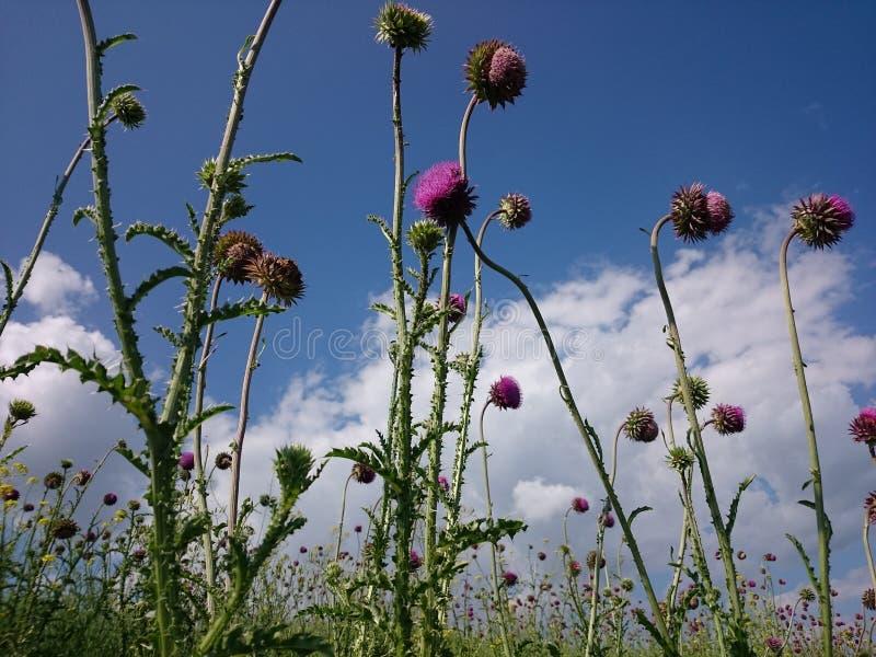 Λουλούδια, ουρανός στοκ εικόνα