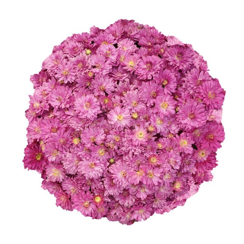 Λουλούδια που απομονώνονται ρόδινα στοκ εικόνες