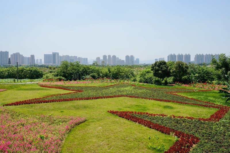 Λουλούδια που καλλιεργούνται στο σχέδιο πεντάλφας στο χορτοτάπητα κοντά στη σύγχρονη πόλη στοκ εικόνες