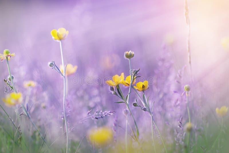 Λουλούδια που φωτίζονται κίτρινα από τις ακτίνες ήλιων στοκ φωτογραφία