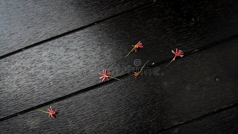 Λουλούδια πτώσης στοκ εικόνα με δικαίωμα ελεύθερης χρήσης