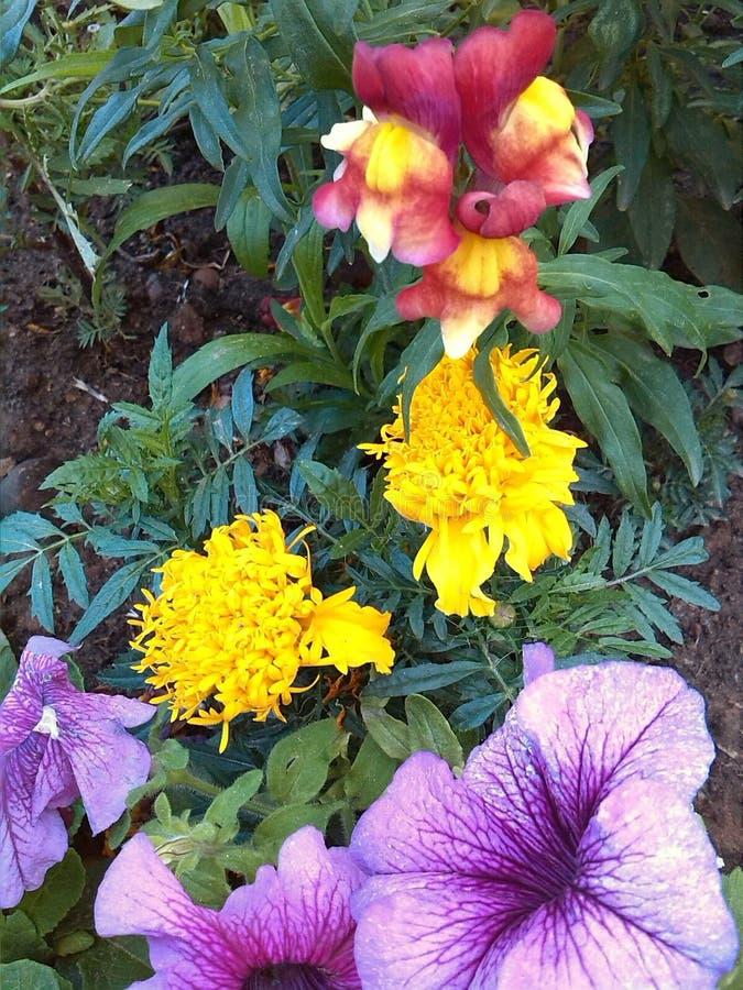 Λουλούδια πόλεων Καλοκαίρι Οδοί του Μινσκ στοκ εικόνες με δικαίωμα ελεύθερης χρήσης