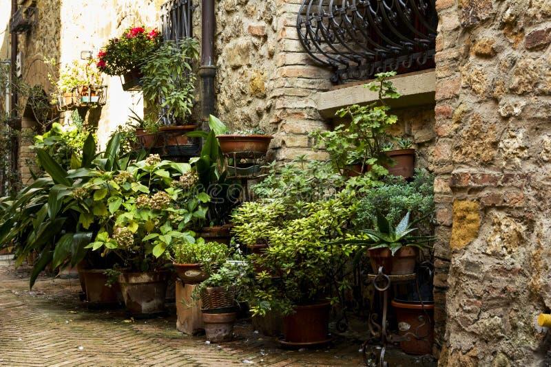 Λουλούδια σε μια παλαιά οδό σε μια πόλη από την Τοσκάνη στοκ φωτογραφία με δικαίωμα ελεύθερης χρήσης