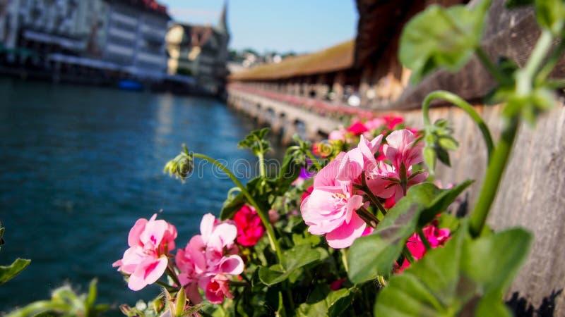 Λουλούδια σε Kapellbrà ¼ cke στοκ εικόνα