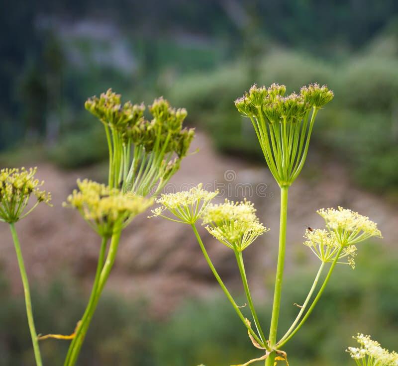 Λουλούδια σε Ouray στοκ εικόνες