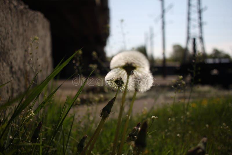 Λουλούδια σιδηροδρόμων στοκ φωτογραφία με δικαίωμα ελεύθερης χρήσης