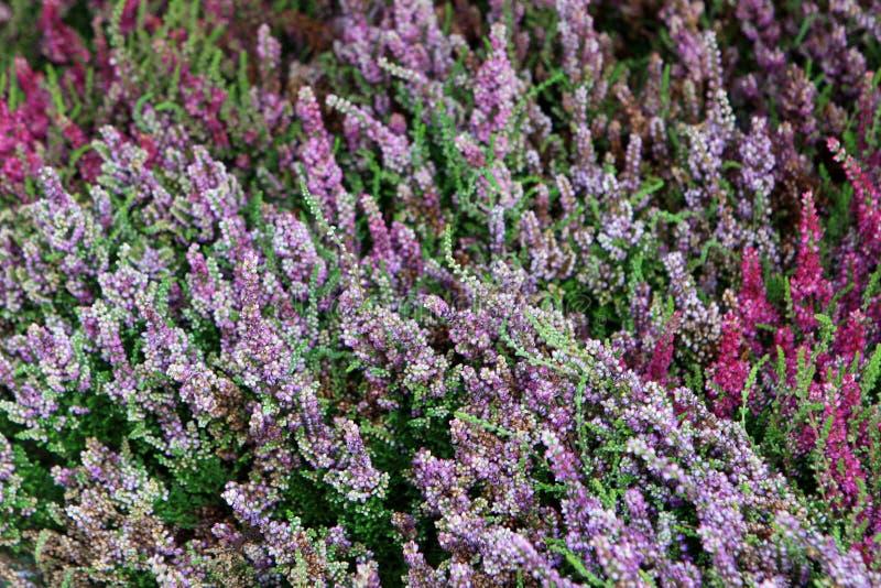 Λουλούδια στην αγορά στοκ εικόνες