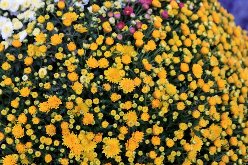 Λουλούδια στην αγορά στοκ φωτογραφία με δικαίωμα ελεύθερης χρήσης