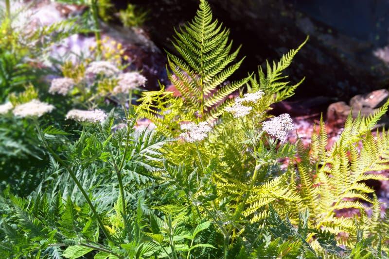Λουλούδια στο αλπικό λιβάδι στοκ φωτογραφία με δικαίωμα ελεύθερης χρήσης