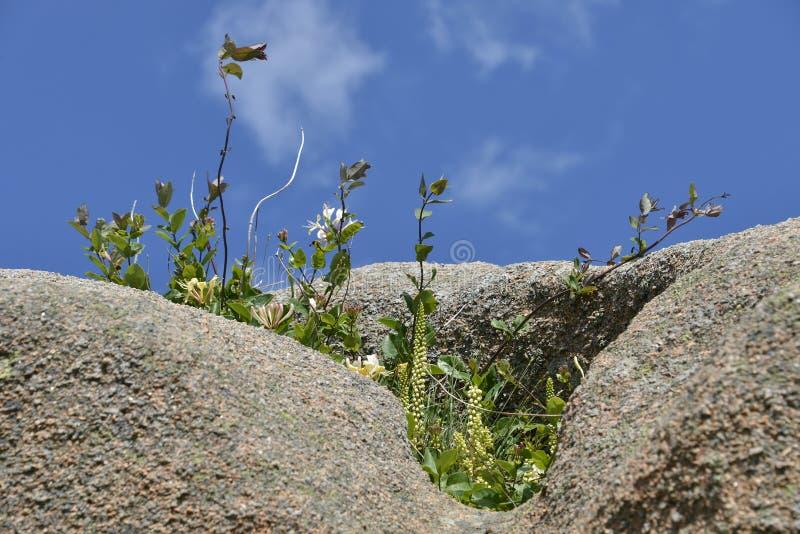 Λουλούδια στο βράχο στοκ εικόνες