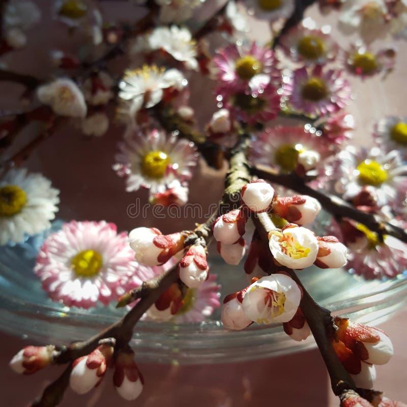 Λουλούδια στο νερό στοκ εικόνες με δικαίωμα ελεύθερης χρήσης