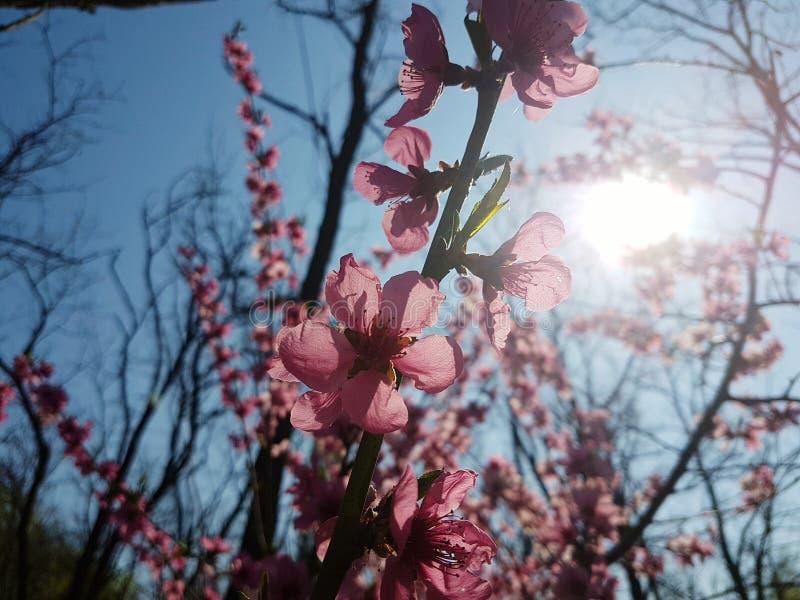 Λουλούδια στο φως του ήλιου στοκ φωτογραφίες