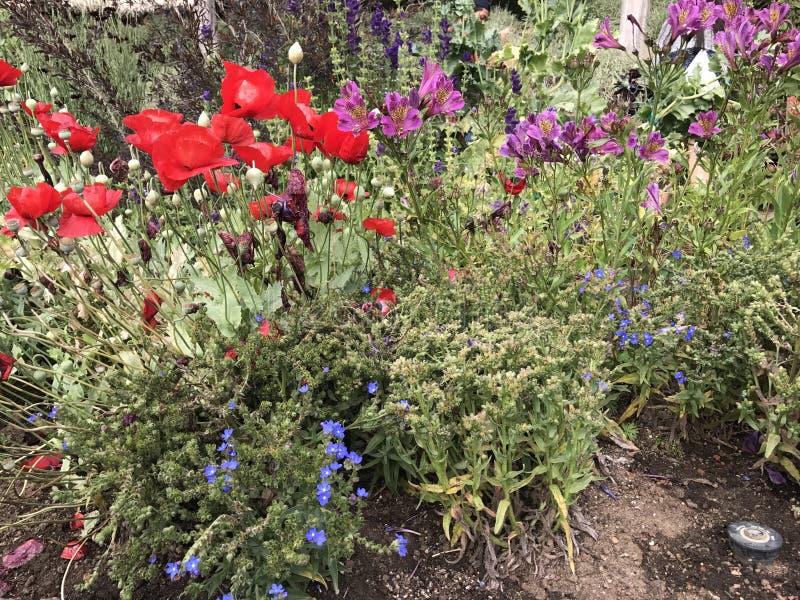 Λουλούδια στο Getty στοκ φωτογραφία
