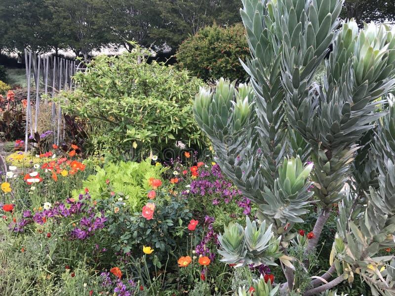 Λουλούδια στο Getty στοκ φωτογραφίες