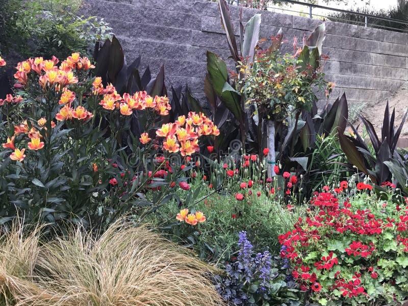 Λουλούδια στο Getty στοκ εικόνα με δικαίωμα ελεύθερης χρήσης