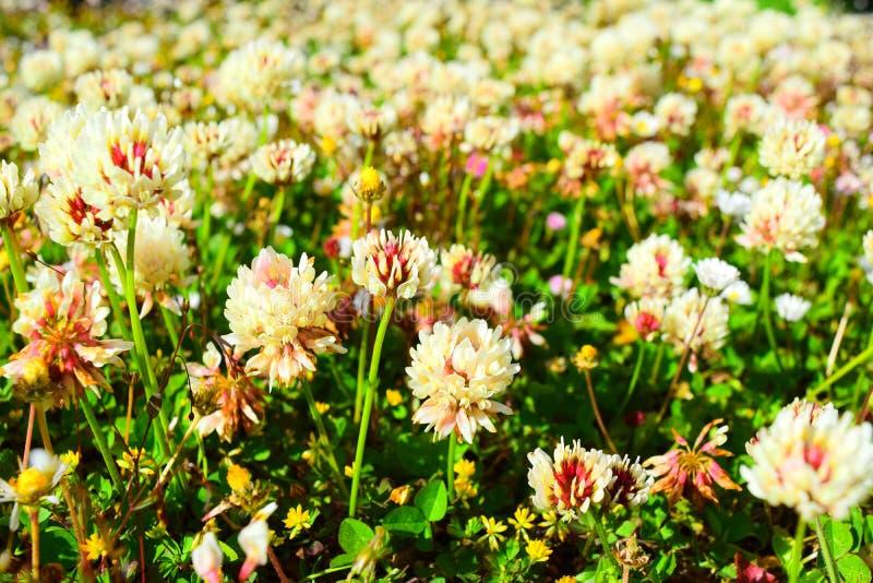 Λουλούδια της Νότιας Αμερικής στοκ φωτογραφία με δικαίωμα ελεύθερης χρήσης