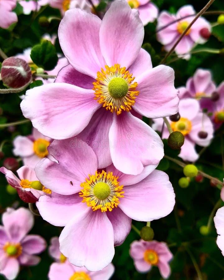 Λουλούδια της πτώσης στοκ φωτογραφία
